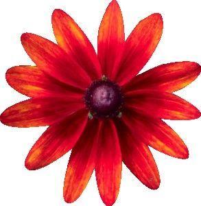 Couleur rouge page 7 - Dessin de fleurs a imprimer en couleur ...